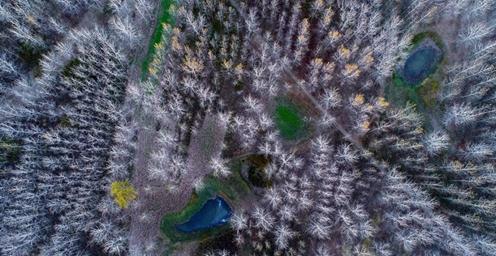 宿鸭湖湿地:初冬的杨树林景观独特