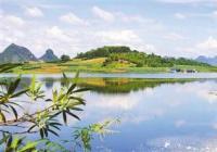 """南阳:白河国家城市湿地公园引大量冬候鸟""""光顾"""""""