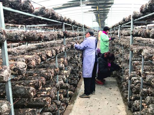 淇滨区大河涧乡——产业基地为脱贫注入持久动力