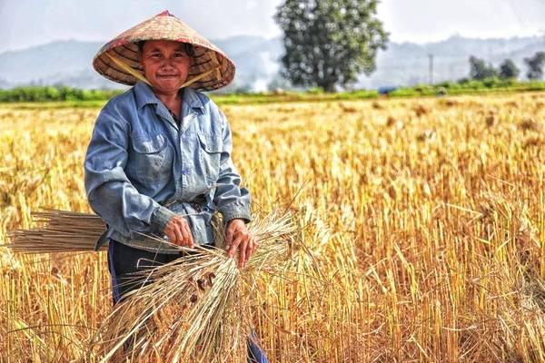"""""""双11""""农产品热销的背后:乡村搭上数字经济快车"""