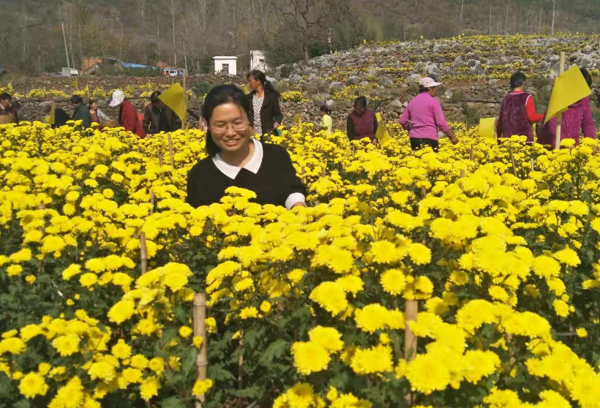 内乡:绿色产业富农 助推脱贫攻坚