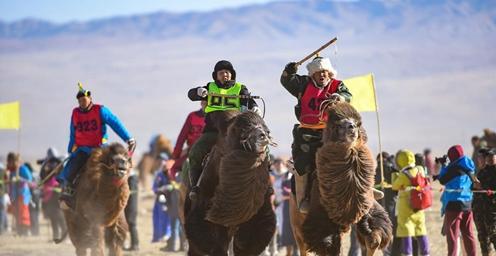 内蒙古乌拉特后旗骆驼文化旅游节开幕 为期3天