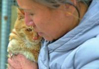 洛阳:退休公务员自费建流浪猫狗救助小院 半年救助动物超120只