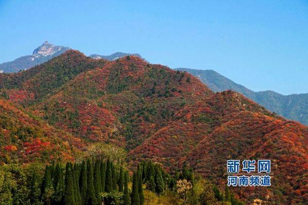 """济源市荣获""""全国森林旅游示范市""""称号 全国仅6个"""