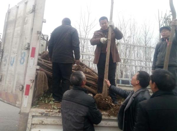 内乡县岞曲镇:再掀冬季造林新高潮 推进绿色崛起惠民生