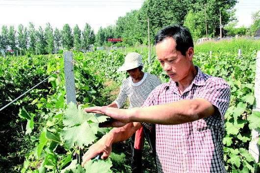 广德福:农民工返乡充分说明农业农村正成为创业创新的热土