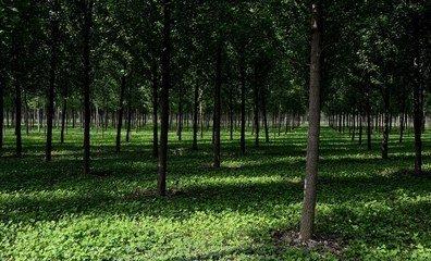 以林养人!河南2.6万生态护林员实现就业脱贫