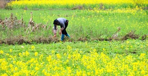 初春时节 多地农民陆续投入农业生产