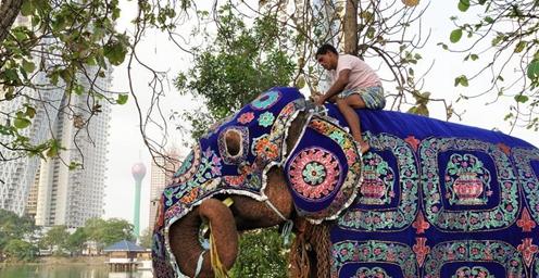 科伦坡:探访贝拉湖大象营地