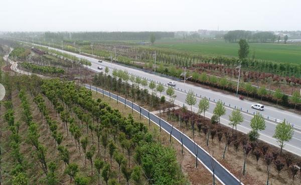 """郏县""""四化""""为国土绿化提速增质"""