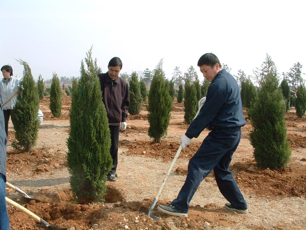 """平顶山3000余人共建青年林 种下4万余棵""""青春树"""""""