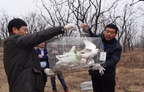 世界野生动植物日 郑州助力73只伤愈鸟类重归大自然