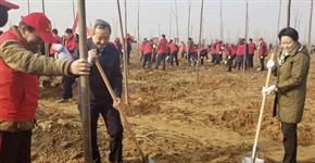 平桥区:2019年将实施4.8万亩植树造林任务