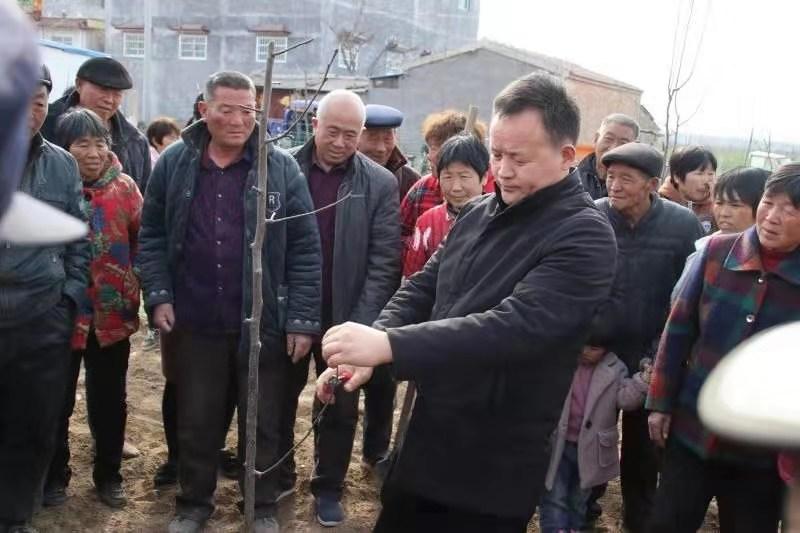 宁陵县科技拔尖人才 酥梨专家杜华义务举办酥梨春季管理技术培训班