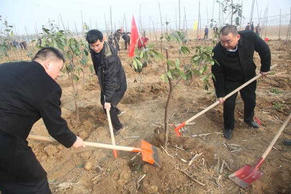 新野农信联社:开展春季义务植树活动