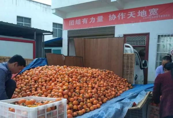 内乡县岞曲镇王井村返乡创业青年带领群众脱贫致富