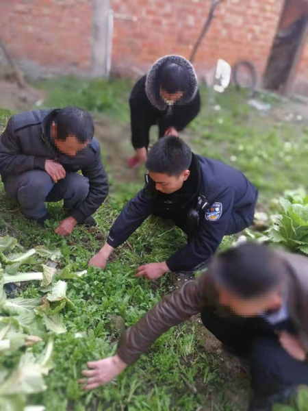 邓州:陶营派出所成功查处一起非法种植罂粟案件