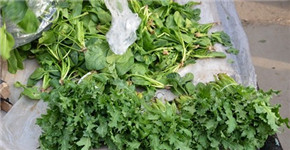 种植罂粟苗当菜卖 夫妻两人被警方依法处理