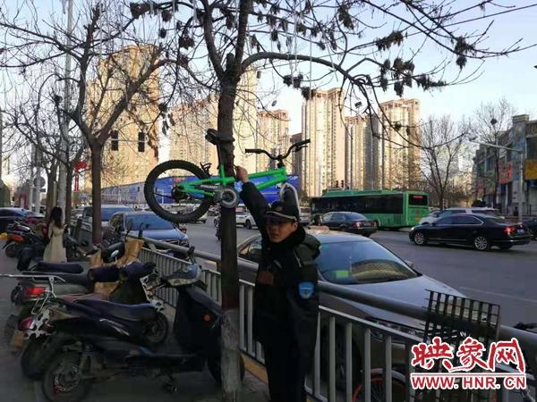 恶作剧?郑州一自行车被挂在树上 原因竟是……
