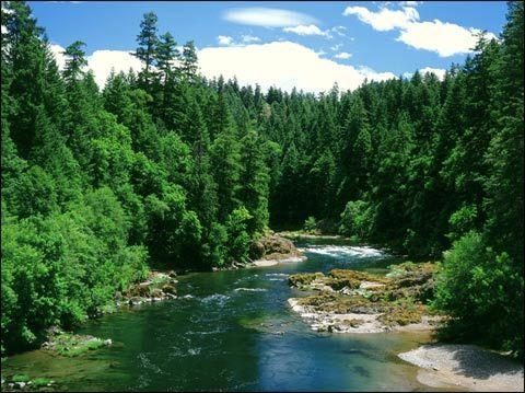 河南推进森林生态建设 2551公里高速公路将实现廊道绿化