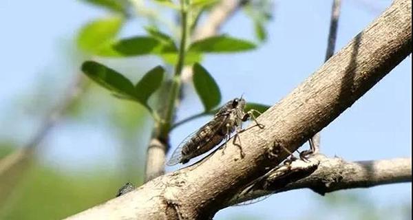 金顶山奇观:中原一大怪 春蝉叫得快