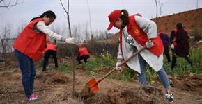 还绿于民!平顶山新华区工矿区废弃地上植树造林千余亩