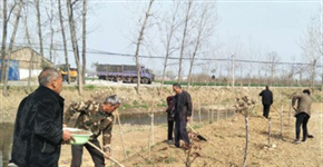 西华县奉母镇掀起春季植树高潮 打造花海园林