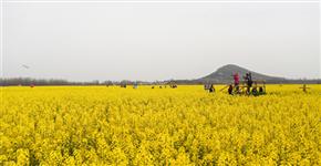 信阳光山:发展油菜产业 助推乡村振兴