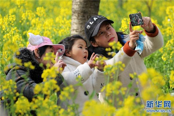 河南鄢陵:樱花缤纷醉游人