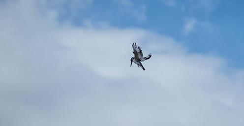 以色列埃拉特举办国际观鸟节