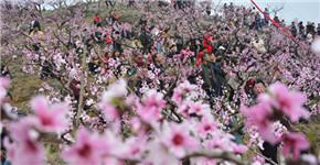 万亩桃花惊艳绽放 鲁山县下汤满山遍野都是赏花人