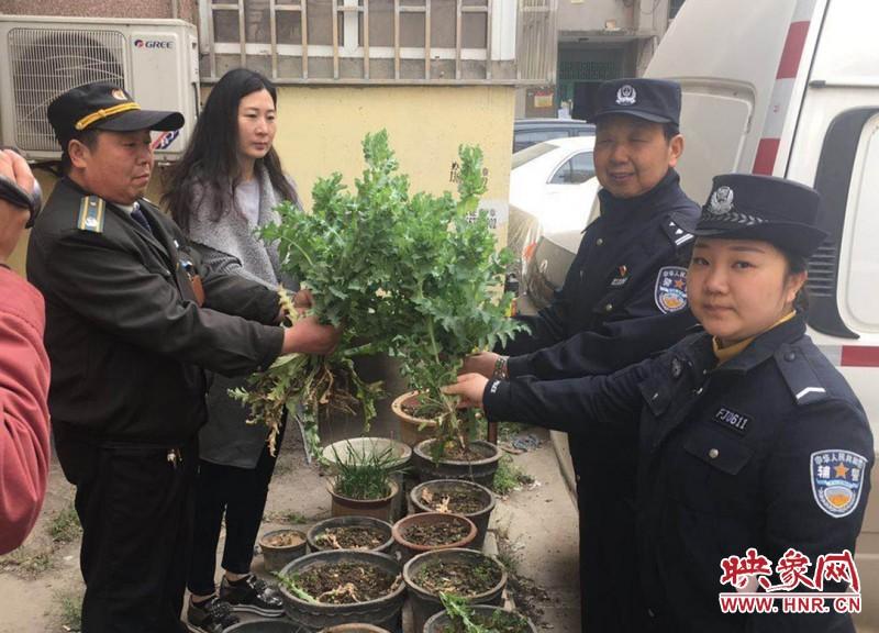 郑州一小区花盆内藏多株罂粟 居民报警后被铲除