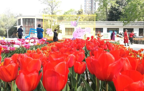 郑州市人民公园第二十二届郁金香花展4月2日开放 等你来看