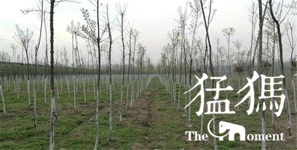 国土绿化 一直在行动:平舆县李屯镇国土绿化再掀高潮