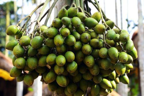 一纸通知叫停槟榔食品广告宣传 槟榔产业引发健康关注