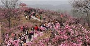 鲁山县红火桃果经济催热乡村旅游