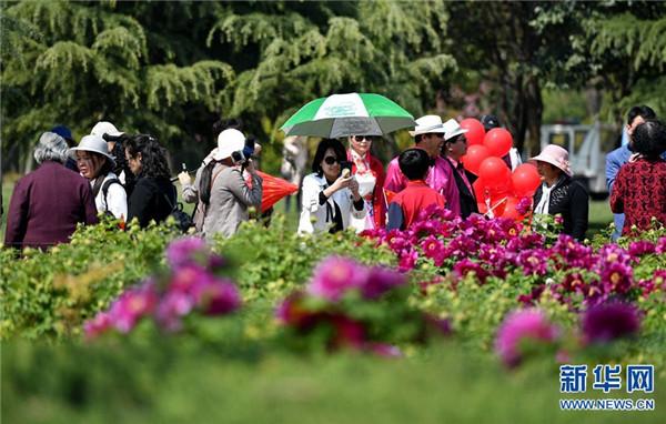 第37届中国洛阳牡丹文化节赏花活动启动