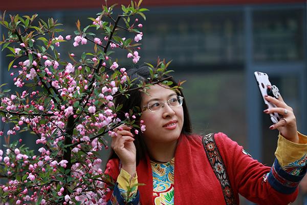 河南栾川:十里桃花盛开 赏花看景醉游人