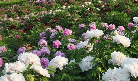 洛阳:中法合建法式花园正式开门迎客