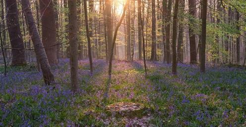 梦幻紫花森林