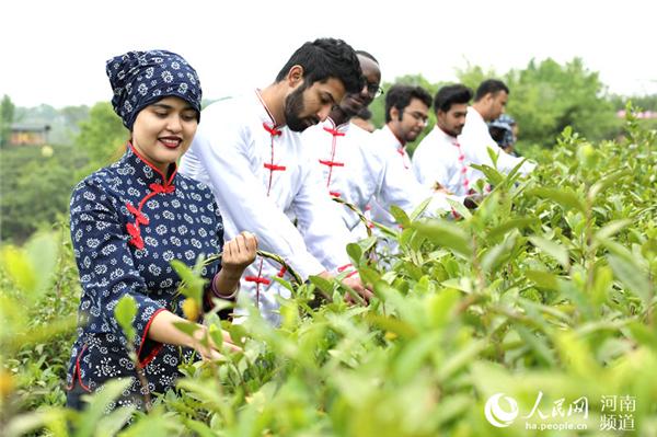 河南信阳:体验传统茶文化 洋学生采新茶