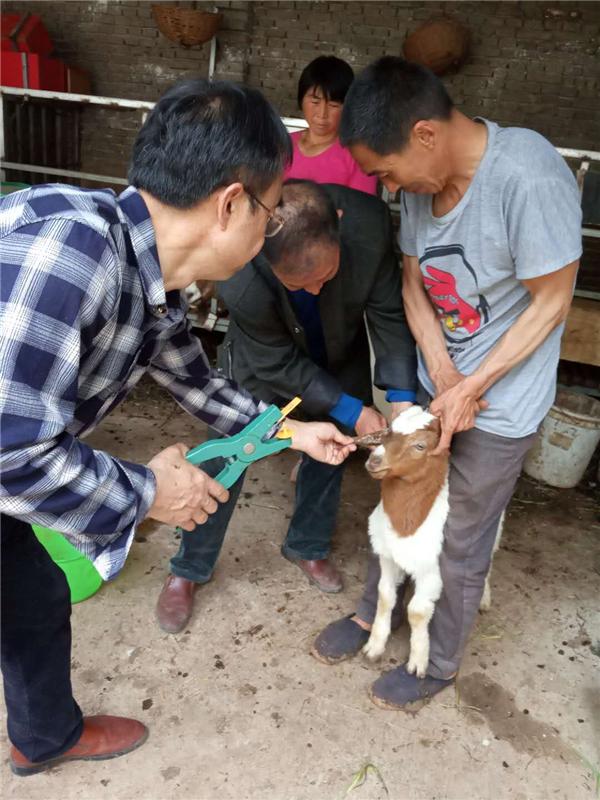 内乡县岞曲镇: 开展春季重大动物疫病防治为脱贫攻坚保驾护航