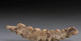 意义重大!巩义双槐树遗址出土五千年前牙雕蚕